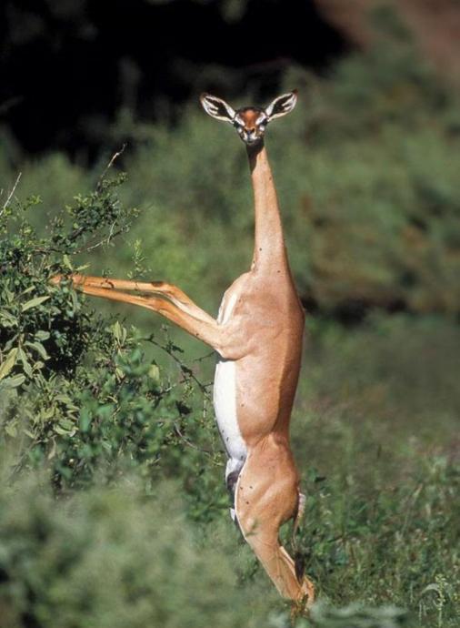 Insanı Türlü şaşkınlıklara Sürükleyen Dünyanın En Garip 20 Hayvanı