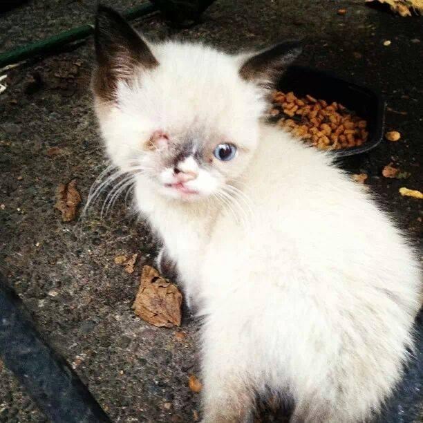 worlds cutest baby animal